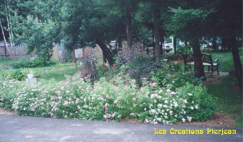 haie de spirées roses et blanches